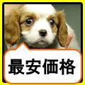 ナカニシ安い.jpg